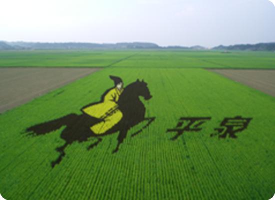 大区画ほ場での田んぼアート